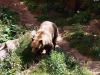 Medvěd Medoušek